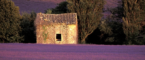 Photo Tour in Provence, Franceome-Provencale, France