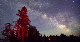 Tree and stars at night, near the Lodge,Crater Lake National Park,Oregon,USA