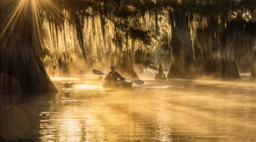 Ancient Cypress Swamps Photo Tour