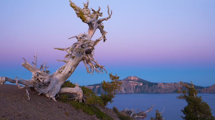 Night Sky Photography at Crater Lake National Park